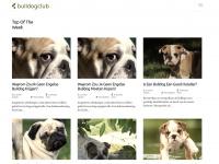 bulldogclub.be