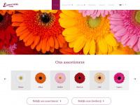 Kwekerijesmeralda.nl - Kwekerij Esmeralda | Gerbera Kwekerij Rijnsburg - Kwekerij Esmeralda