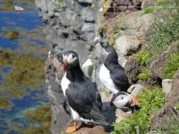 rondreizen-ijsland.nl