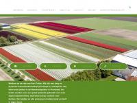 vavitulips.nl