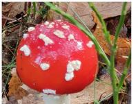 kantooropleidingen.nl