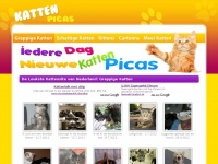 Katten-picas.nl - Deze domeinnaam is via de veiling van DomainOrder.nl geregistreerd