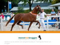 marcelvanbruggen.nl