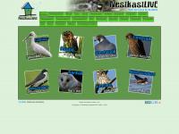 nestkastlive.nl