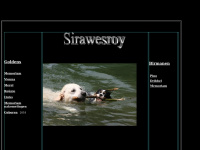 Sirawesroy.nl - Golden Retrievers