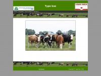 Typekoe.nl - Type koe