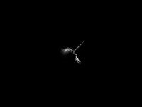 wintersiroop.nl
