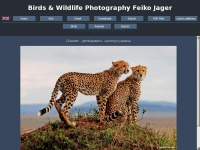 birds-and-wildlife-photography-feiko-jager.nl