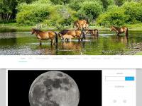 neokcomp.nl
