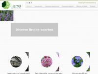 kwekerijsilene.nl